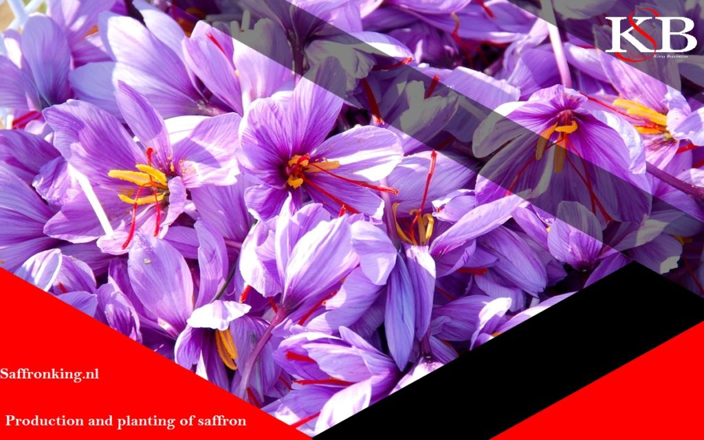 Saffron export laws to Italy