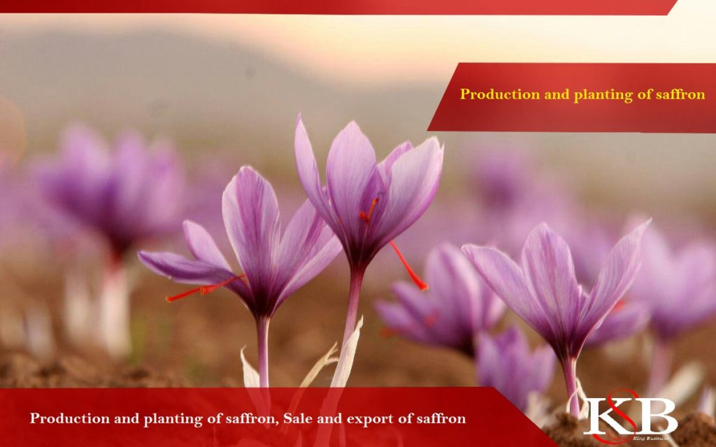 Price of saffron in the Germany today