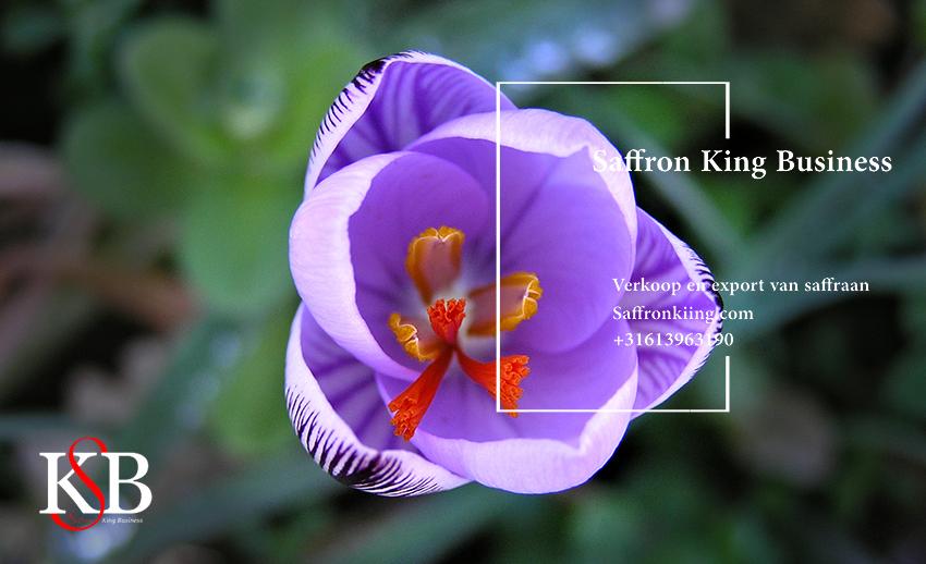 Prijs van Iraanse saffraan in Nederland 985 € . prijs per kilo saffraan in Europa? Export van saffraan naar Nederland. Groothandel in saffraan