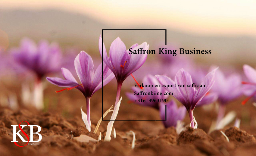 Price per kg of saffron (in Europe and the Netherlands)